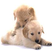 犬の幼稚園イメージ