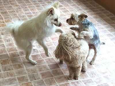 犬同士の社会化