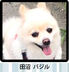 スタッフ愛犬