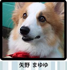 スタッフの愛犬